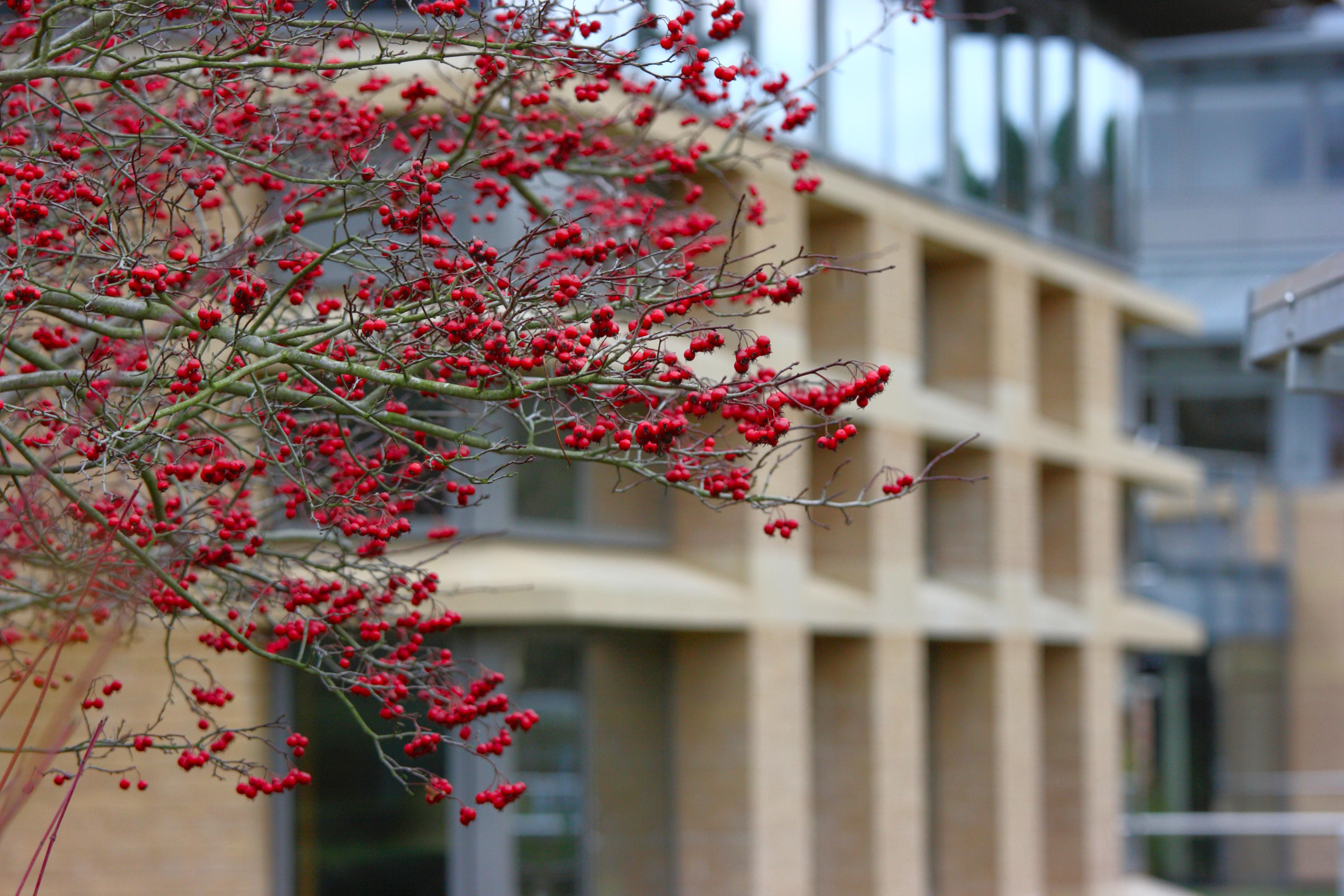 Centre for Mathematical Sciences, Cambridge